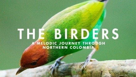 Conversation on the documentary The Birders by Procolombia